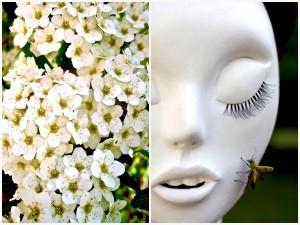 fleurs-cinq